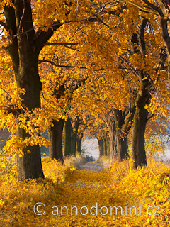 Podzimní javorová alej